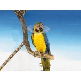 Carcan pour oiseau UU