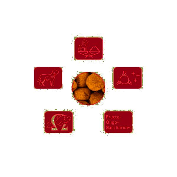 Specific - Dechra CXD-M Adult Medium Breed